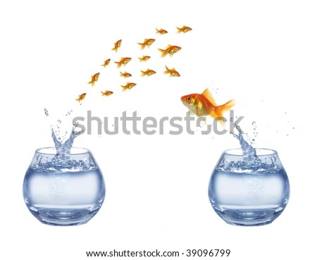 gold jumping out from aquarium on white background fish