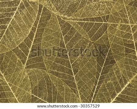 Gold leaf skeleton background over silk - stock photo