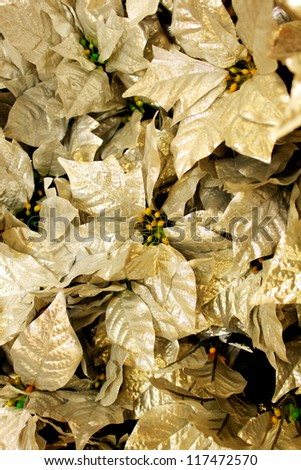 Gold leafs of a poinsetta - stock photo