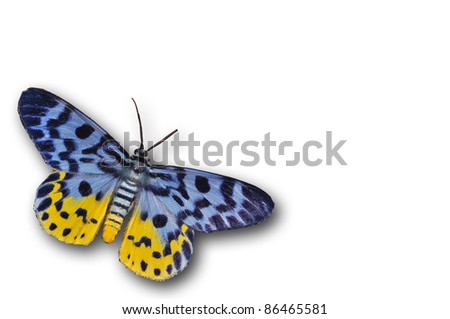 gold moth butterfly isolated on white - stock photo