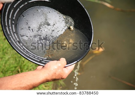 gold panning, man striking it rich by finding the mother lode or at least a nugget or two - stock photo