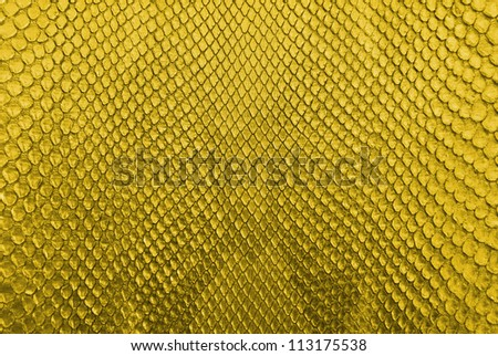 Gold python snake skin texture background. - stock photo