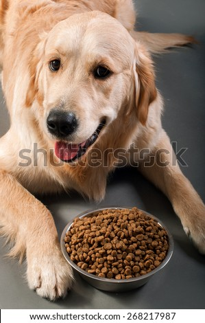 Gold retriever with petfood