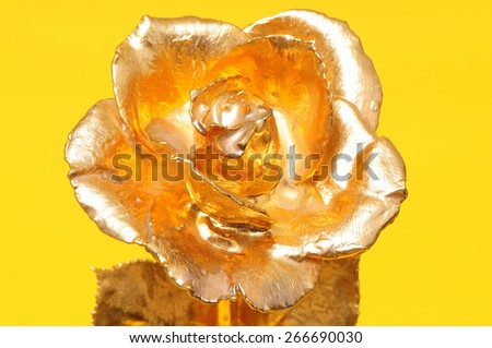 Gold rose isolated over a yellow background - stock photo