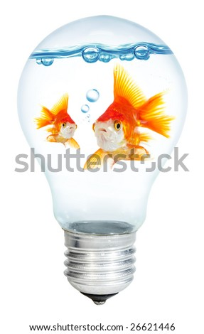 Gold small fish in light bulb on a white background - stock photo