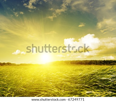 Gold sunset in green grass field. Belarus. Deciduous forest in the distance.