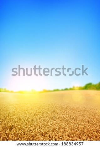 Gold wheat fields with a wheat shaped cloud.