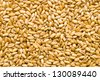 gold wheat texture on white background - stock photo