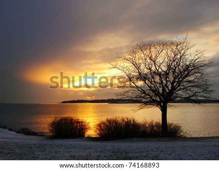 Gold winter sea sunset and tree in Finland - stock photo
