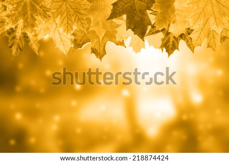 Golden autumn background with beautiful foliage - stock photo