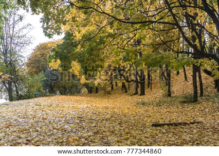 Golden autumn in a Park in the Central part of Russia