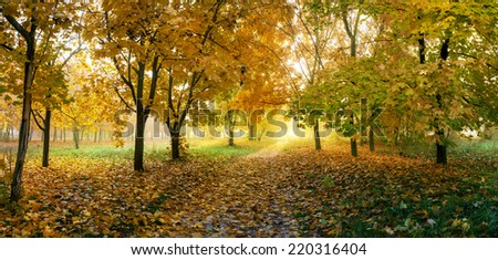 golden autumn in sunny forest, natural background - stock photo