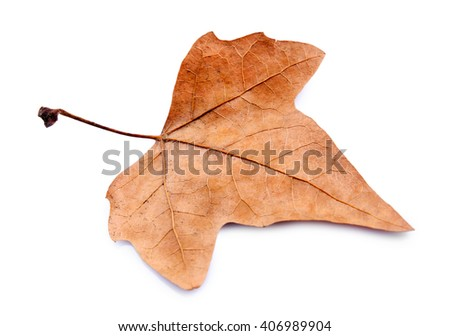 Golden autumn leaf isolated on white background - stock photo