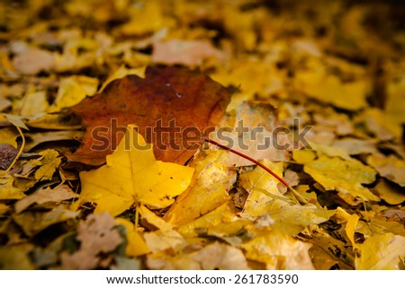 Golden autumn leaves on the ground. - stock photo