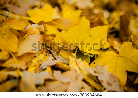 Golden autumn leaves on the ground. - stock photo