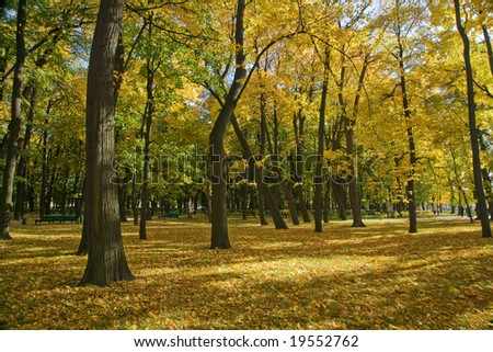 golden autumn park with maples