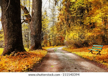 golden autumn, path in forest - stock photo