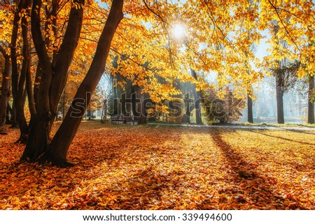 Golden autumn. The sun's rays pass through trees in the park.