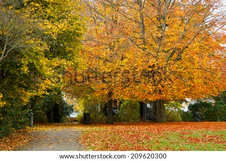 golden autumn time in parke near Frederiksberg castle, Hilleroed, Denmark