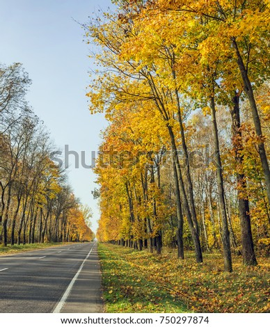 Golden autumn with yellow and red leaves on the trees