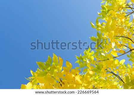 Golden autumn yellow leaves against clear blue sky. Corner frame background with free copy-space area for text. - stock photo