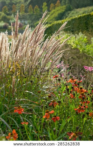 golden autumnal vegetation of grasses and flowers - stock photo