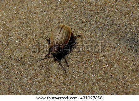 Golden beetle crawled on the wet river sand