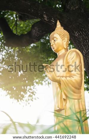 Golden buddha statue, standing postures under big tree. - stock photo