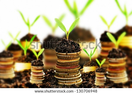 Golden coins in soil with young plant isolated. Tilt shift lens use. - stock photo
