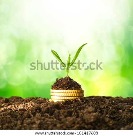 Golden coins in soil with young plant. Money growth concept. - stock photo