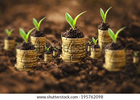 Golden coins in soil with young plant. Money growth concept. Tilt-shift effect. - stock photo