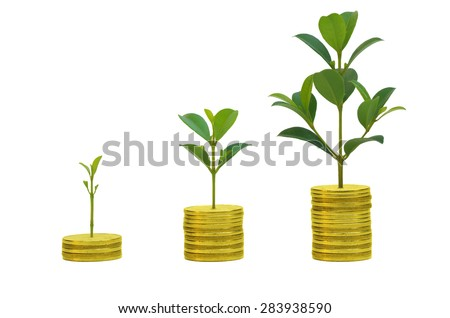 Golden coins in soil with young plant, Money growth concept, white isolation background - stock photo