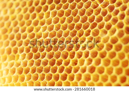 golden color honey comb as background. - stock photo