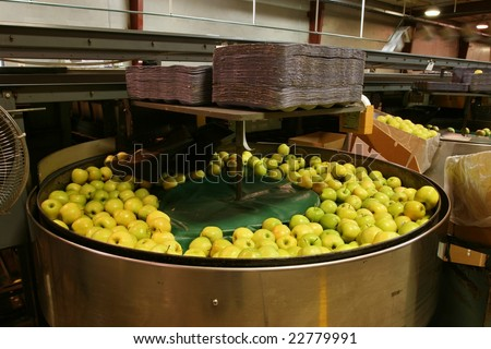 Golden Delicious Apples in a packing tub in a warehouse - stock photo