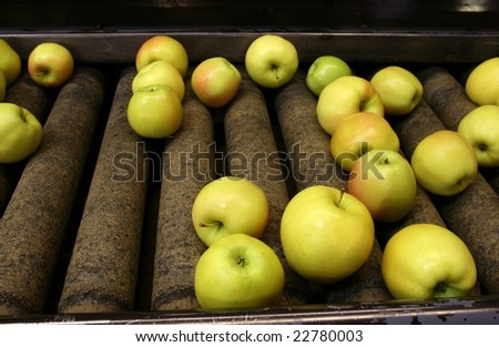 Golden Delicious Apples on a sorting table in a warehouse - stock photo