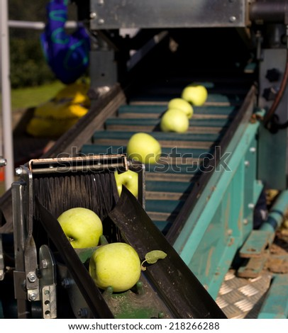 Golden delicious apples on automated machine for harvesting - stock photo