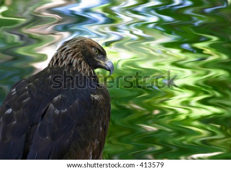 Golden Eagle at the Tracey Aviary in Salt Lake City, Utah - stock photo