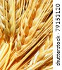 Golden ears of wheat - stock photo