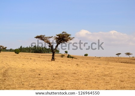 Golden ethiopian landscape and rural scene in the dry season, Simien Mountains - stock photo