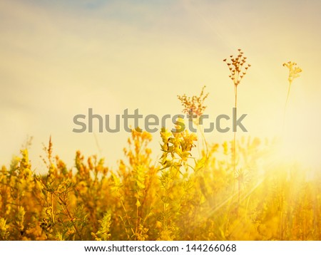 Golden evening on the meadow, rural summer backgrounds - stock photo