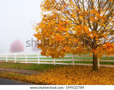 Golden Fall foliage alongside a field in Holmdel New Jersey. - stock photo