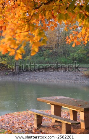 golden fall scene with blowing leaves - stock photo