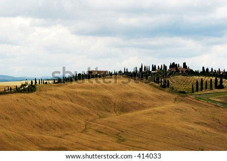 Golden fields in a Tuscan Landscape