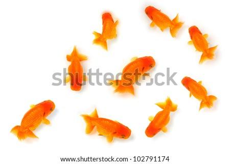 Golden fish - stock photo