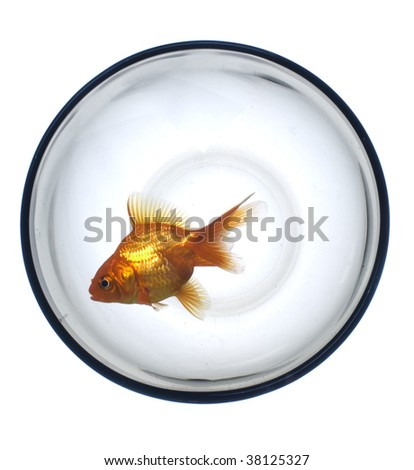 Golden fish in the glass bubble - stock photo