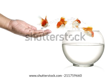Golden fish jumping out of  human palm and into fishbowl isolated on white - stock photo