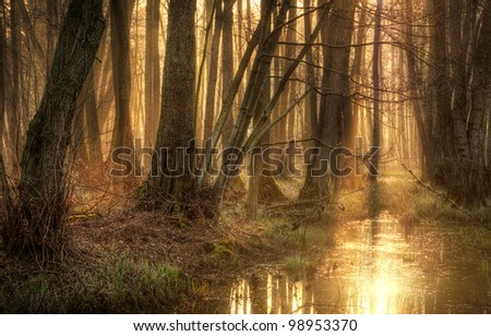 golden forest - stock photo