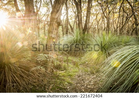 Golden forest landscape scenic at sunset with sunlight beaming in through trees - stock photo