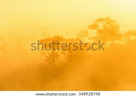 golden forest with fog and sunlight - stock photo