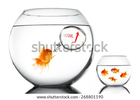 Golden fsh in aquarium teaching small how to increase income - stock photo